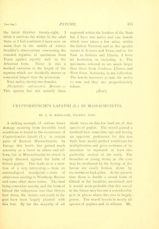 Chryptorhynchus Lapati (L.) in Massachusetts